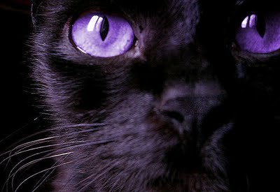 Black Cat with Purple Eyes